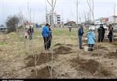 گرگان| کاشت 180 هزار اصله نهال در محل اجرای طرح هادی روستاهای گلستان