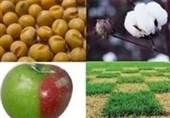 ایجاد 3 محدودیت جدید برای واردات محصولات تراریخته به کشور+ سند