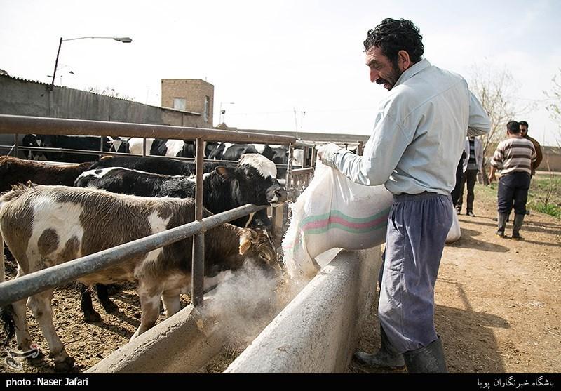 چند طرح کشاورزی و عمرانی در روستاهای قلعه گنج افتتاح شد