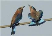 صوبہ خوزستان جنگلی حیات اور موسمی پرندوں کی سرزمین + نایاب تصاویر