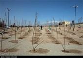 بخشی از کرج برای جلوگیری از ریزگردها درختکاری میشود