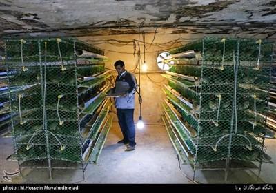 مسعود سبزآبادی با سرمایه اولیه 8 میلیون تومانی هم اکنون روزانه 2800 تخم مرغ به بازار عرضه می کند