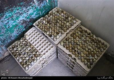 به گفته سبزآبادی تقاضا برای خرید تخم بلدرچین زیاد است و بازار جوابگوی نیاز مصرف کننده نمی باشد