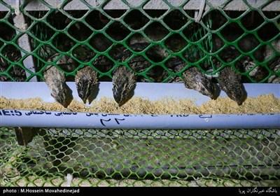 بلدرچین پرندهای پرجنب و جوش از خانواده ماکیان و زیرخانواده کبکسانان است و دارای گوشت بسیار لذیذ، خوشطعم و مقوی است