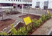 بزرگترین باغ آکادمیک گیاهان دارویی کشور در گیلان ایجاد شد