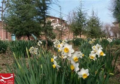 مقبوضہ کشمیر میں بہار کی آمد