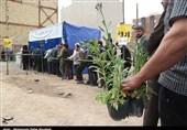بیاطلاعی ستاد 137 شهرداری از طرح کاشت رایگان درخت