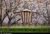 Iran's Beauties in Photos: Spring in Ardabil
