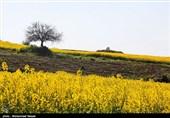بجنورد| کود و سم با قیمت یارانهای برای کشت پائیزه به کشاورزان داده میشود