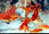 ماهی قرمز را از دسترس بچهها دور کنید