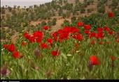 """الطبیعة الساحرة لـ منطقة """"بازفت"""" فی محافظة جهار محال وبختیاری جنوب غرب ایران+صور"""