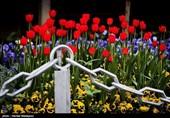 بہار کی آمد پر پھولوں کی کلیاں