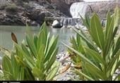کرمان| فصل بهار و طبیعت بکر و سرسبز ریگان میزبان میهمانان نوروزی