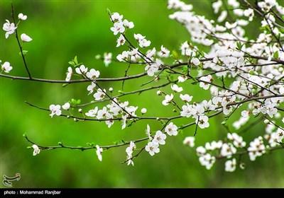 فصل الربیع فی محافظة کیلان