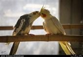 ورود قوه قضائیه به پرونده پرندههای قاچاق در باغ پرندگان