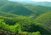 شهرکرد  آفت جوانهخوار بلوط به 15 هزار هکتار از جنگلهای بلوط چهارمحال و بختیاری خسارت زد