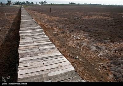خشکی ساحل دریا در گلوگاه