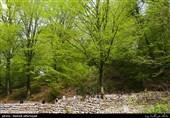 استان ایلام الگوی موفق کشور در جنگل کاری و حفظ منابع طبیعی است