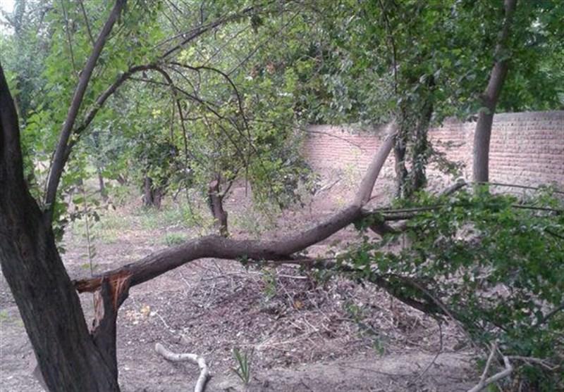 سیل تولیدات باغی استان کرمانشاه را 15 درصد کاهش داد
