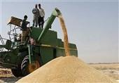 40 هزار تن گندم در مازندران خریداری شد