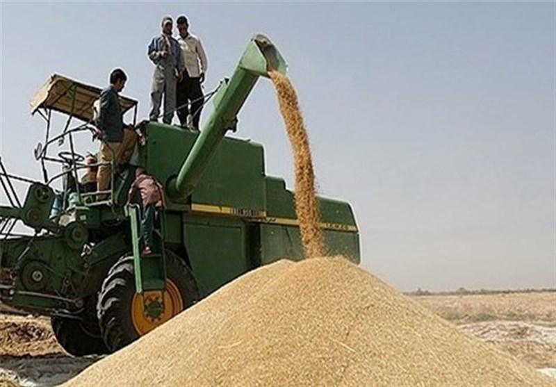 نرخ خرید تضمینی گندم بدون افزایش قیمت اعلام شد