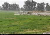 خسارت خشکسالی پاییزه به 100 هزار هکتار از اراضی کشاورزی گلستان
