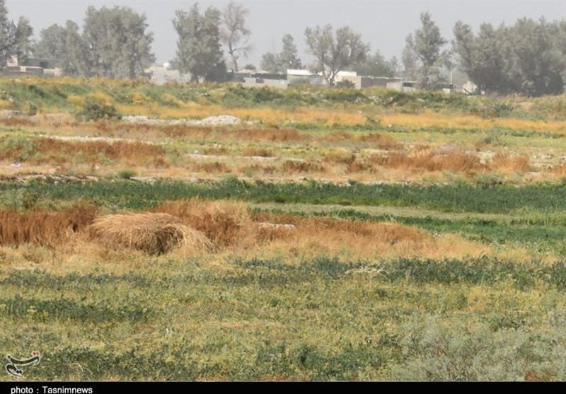 ساری| اراضی زارعی مازندران 600 میلیون متر مکعب کسری منابع آبی دارد