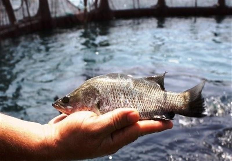 «منشور اقتصاد در گام دوم»|سواحل دریایی ایران فرصت طلایی برای پرورش 1 میلیون تن ماهی در قفس