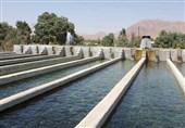 خوزستان| پساب نیشکر فرصتی برای پرورش ماهی است