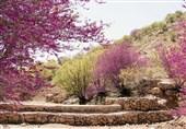 ایلام| از قطع 480 درخت کهنسال تنگه ارغوان تا انکار مسئولان