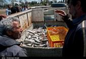 صیادان گیلانی 1084 تن ماهی استخوانی از دریای خزر صید کردند