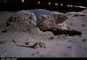 گونههای مختلف لاکپشت دریایی در چابهار حمایت میشوند+ فیلم