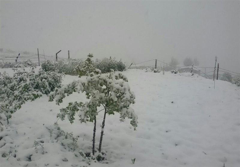 مازندران| محورهای مواصلاتی استان مازندران پوشیده از برف است