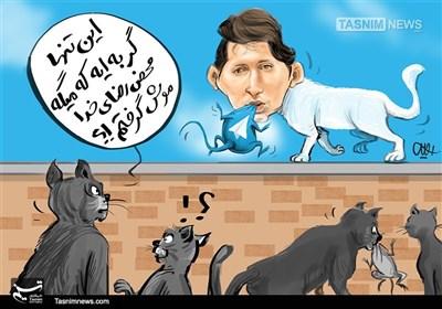 کاریکاتور/ گربه پاول دوروف !!!