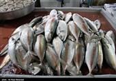 افزایش قیمت ماهی در یاسوج + قیمتها