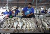 بازار عرضه آبزیان در کرمانشاه راهاندازی میشود
