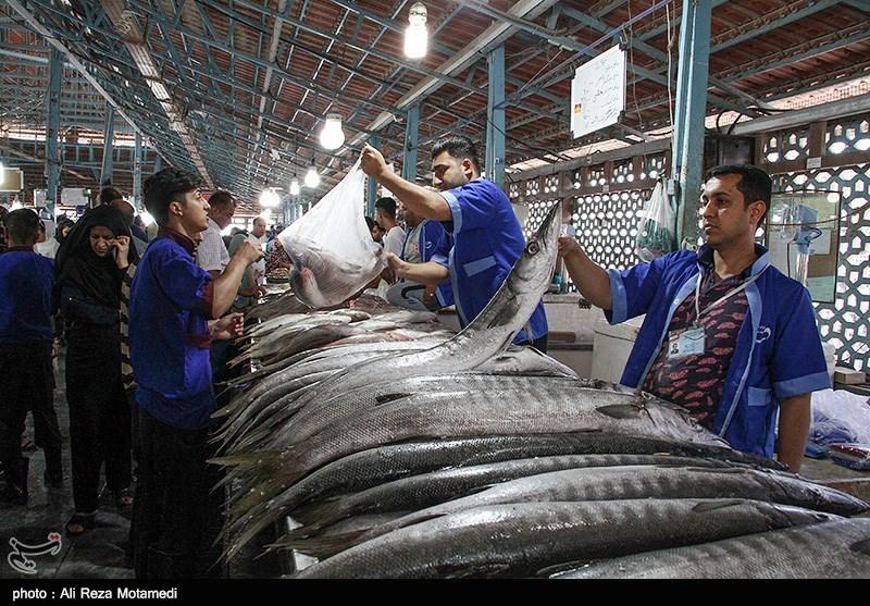 گرانی گوشت سبب رونق بازار ماهیفروشان مازندران شد