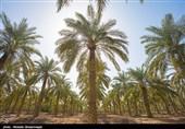 کشاورزی در 50 هزار هکتار «میدان مین»/ تمایل چین برای فاینانس 1.7 میلیارد دلاری در دشتهای خوزستان و ایلام