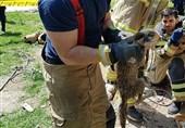 عملیات آتشنشانان برای رهاسازی روباه از عمق چاه 10 متری + تصاویر