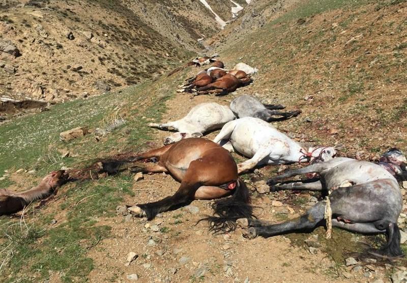 کشتار اسبهای کولبران / فیلم