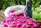 فارس|گل محمدی به نام میمند به کام دیگر شهرها؛ تولیدکنندگان در تنگنای مشکلات