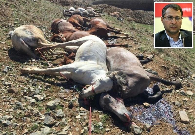 کیخا: سازمان محیط زیست برای توقف کشتار اسبهای باربر با ناجا مذاکره کند