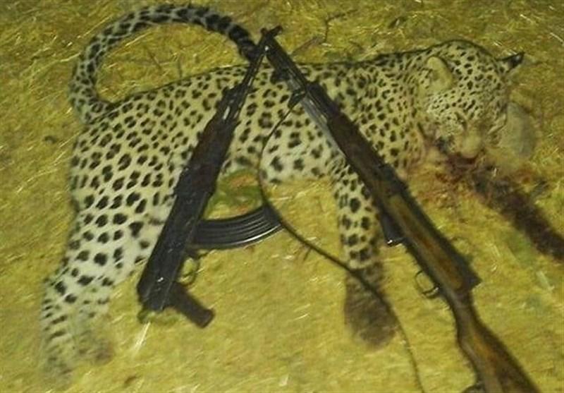 کشتار پلنگ به دست متخلفان کلاشینکفبهدست در ایلام