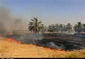 هزاران هکتار مزارع گندم و جو عراق در آتش سوخت