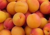 قیمت عمده فروشی انواع میوه/ زرد آلو 20 هزار تومان شد+جدول