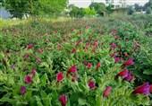 پارک گیاهان دارویی در اردبیل ایجاد میشود