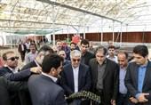 شیراز  زنجیره فرآوری گیاهان دارویی در استان فارس اجرایی شود