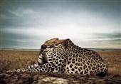 مونولوگهای پرطمطراق متولیان حیات وحش در روز جهانی تنوع زیستی