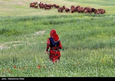 عشایر استان همدان