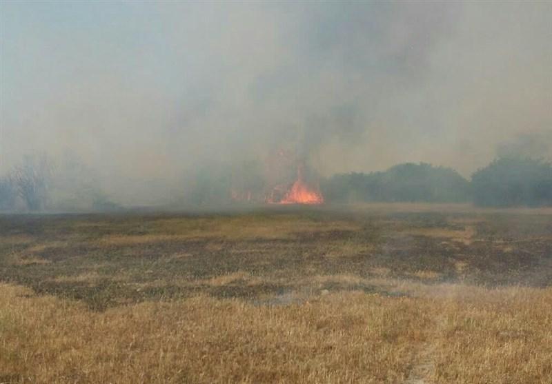 مازندران| آتش به جان میانکاله افتاد/ تلف شدن گونههای نادر جانوری منطقه